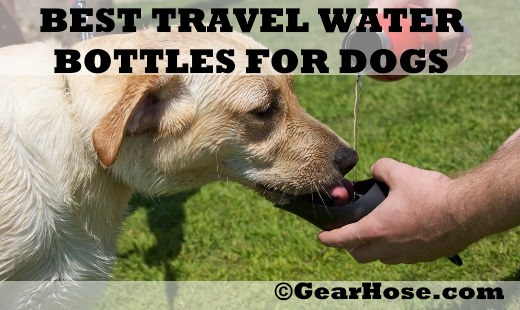 best travel water bottles for dogs