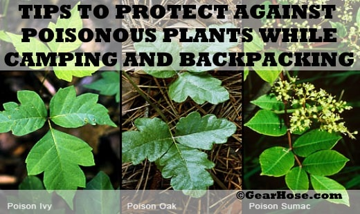 how to protect against poisonous plants while camping