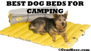 best dog beds for camping